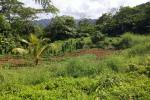 Agricultural Property At Marigot  (Captain Bruce)